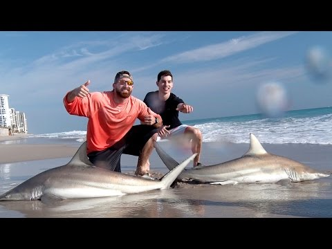 Shark Fishing with Dude Perfect