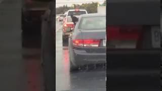Пес поющий под дождем