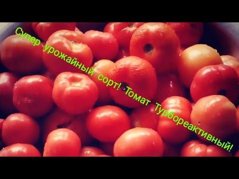 Сорт томата Турбореактивный, очень урожайный | турбореактивный | урожайность | посадить | помидоры | уличные | томатов | помидор | томата | сажаем | лучший
