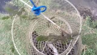 білі цілі де рибної ловлі