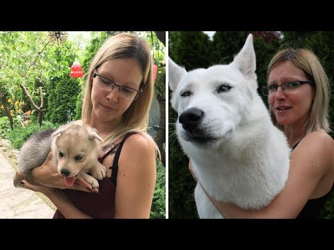 My Puppy Grow Up!   From The Dog's Point Of View!
