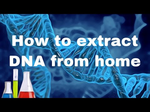How to extract DNA from your check, animal, and a plant