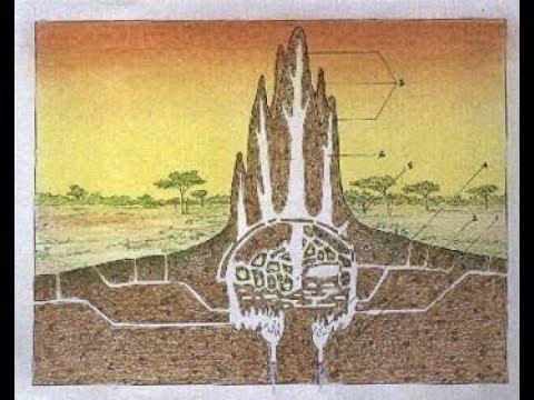 Part 3 Architecture - Eternal Symbols - Anthills, Serpents and Umbrellas