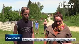 Необъявленная война: в с. Коропово Змиевского района счет убитых собак идет на десятки