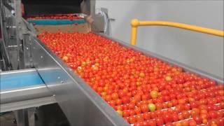 GP Graders - AirJet® Electronic Cherry & Grape Tomato Grader