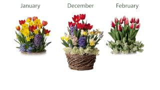 Three Months Of Flower Bulb Gift Gardens Sku#8058 - Plow & Hearth
