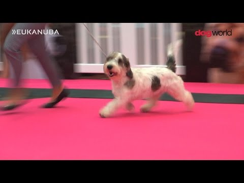 Pup of the Year 2016 Final - Dog World/Eukanuba