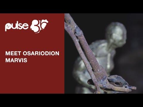 Meet Osarodion Marvis A Sculptor From University Of Benin City, Nigeria | Pulse TV