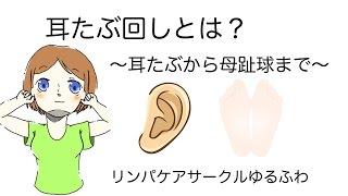 耳たぶ回しとは?〜耳たぶから母趾球まで〜
