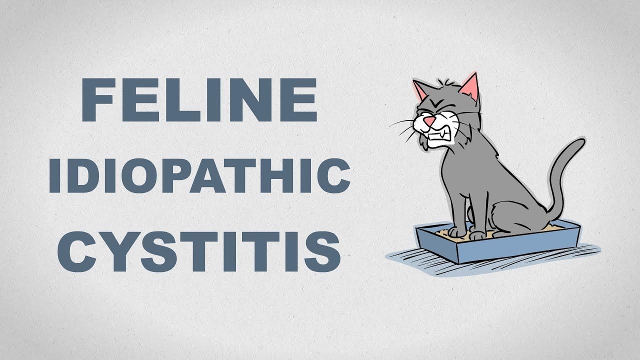 FELINE IDIOPATHIC CYSTITIS DOWNLOAD