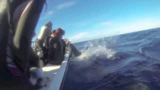 Shark jumps inside the boat