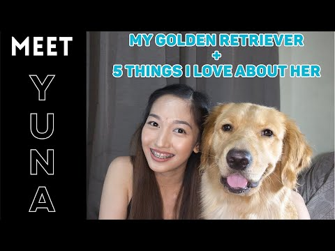 My GOLDEN RETRIEVER Yuna and The Five Things I LOVE About Her | Philippines