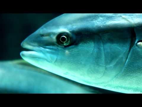 MY VISIT - TWO OCEANS AQUARIUM | 2011