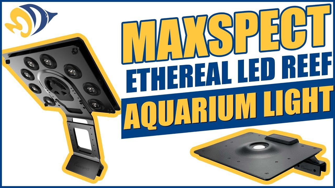 maintaining marine reef aquarium Current usa orbit marine aquarium  you might want to add a heater to the water to keep it within the recommended reef aquarium  this is to help in maintaining.