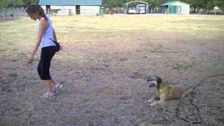Austin Dog Training-leave It, Come, Stay, W/distractions