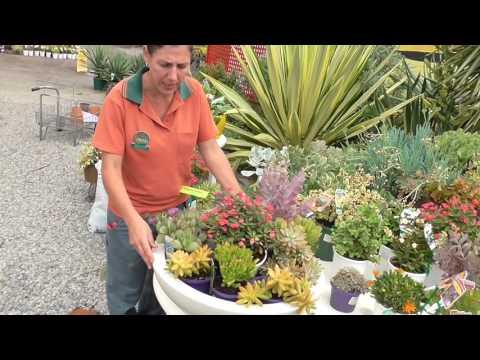 Dawson's Garden World - Succulents and Display Ideas