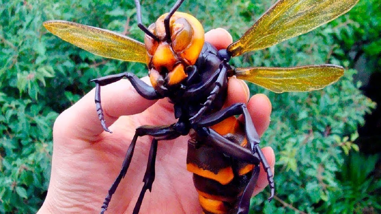 10 MOST DANGEROUS INSECTS YOU MUST RUN AWAY FROM