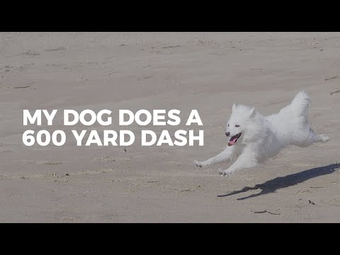 600 Yard Dash For Dogs | Lure Coursing Vlog