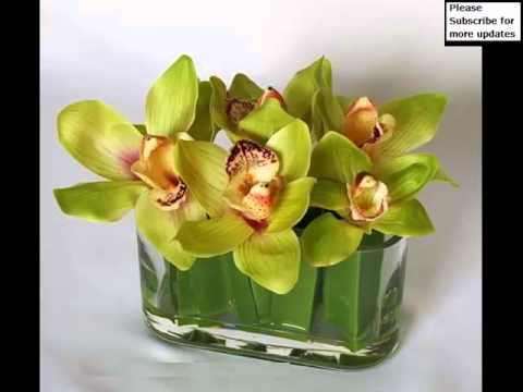 Green Cymbidium Orchid Collection Of Pictures