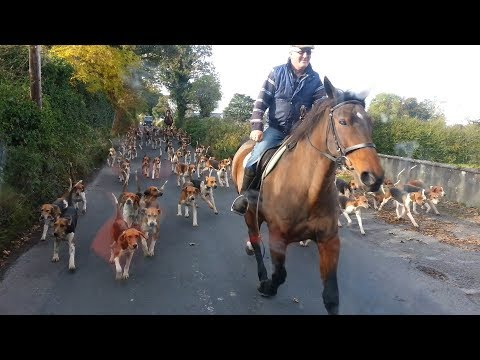 How to walk with a hundred dogs