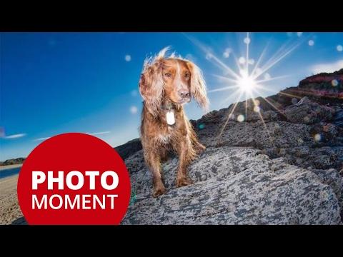 Photo Critique—Dog Photography—High Speed Sync | PhotoJoseph's Photo Moment 2017-01-30