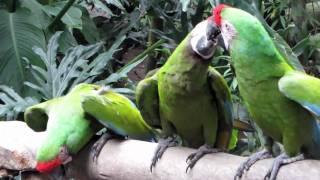 Zoológico Guadalajara