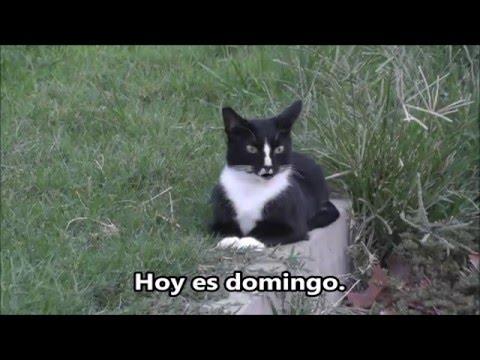 Aprenda ingles con gatos: Que dia es hoy?  What day is today?