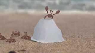 Crab in Car ( краб в машине)