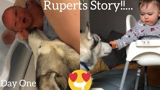 My Husky Took Time To Love My Baby But Now The Bond Is So Beautiful! [RUPERTS STORY!]