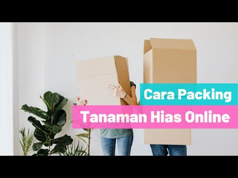 Cara Packing Bibit Tanaman Hias