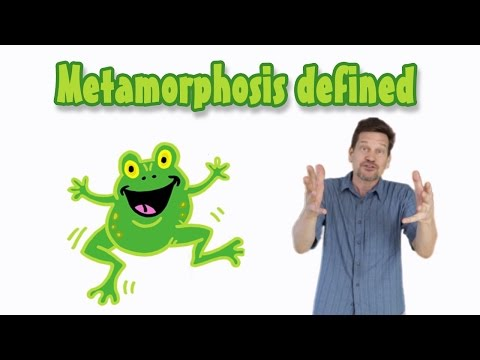 What's Metamorphosis? What creatures go through one? Do humans?