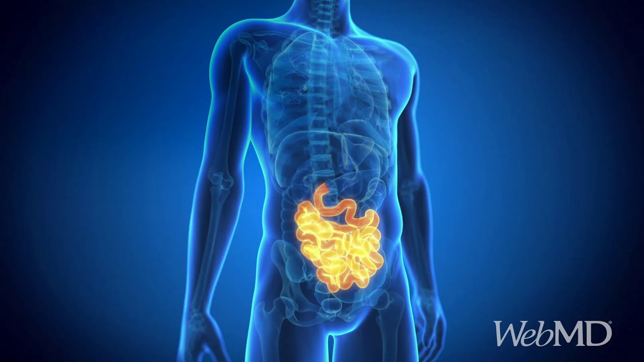 Amazing Facts About Your Intestines | WebMD - YouTube