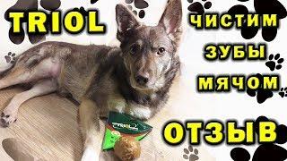 Кости TRIOL ⚽ Форма Мячик ❤ Зубная щетка для собаки