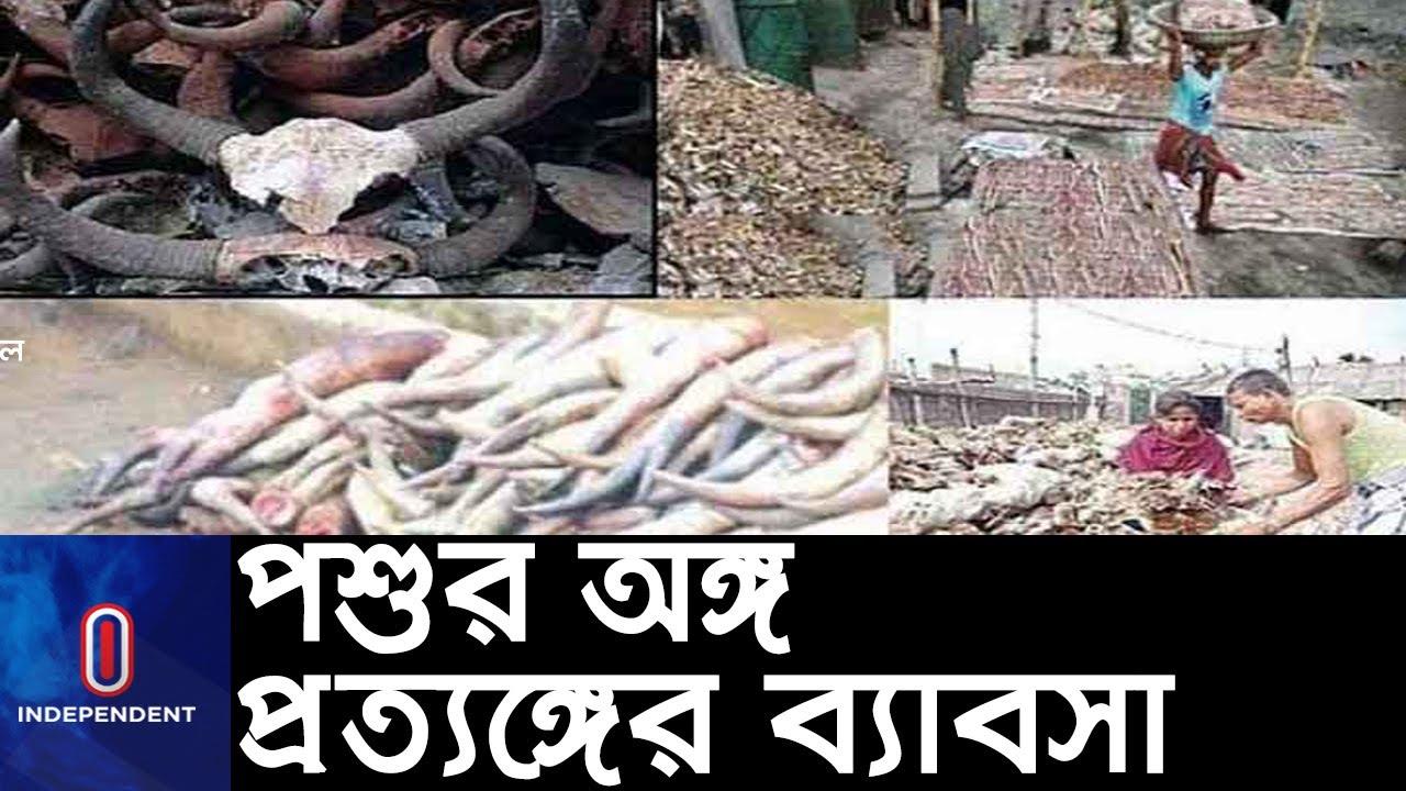 উচ্ছিষ্ট অংশ রপ্তানি হচ্ছে অনেক দেশে    Animal Organ Export