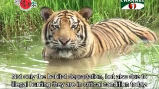 Nature and Life - Episode 196 (Endangered Wildlife of Sundarbans) Mp3