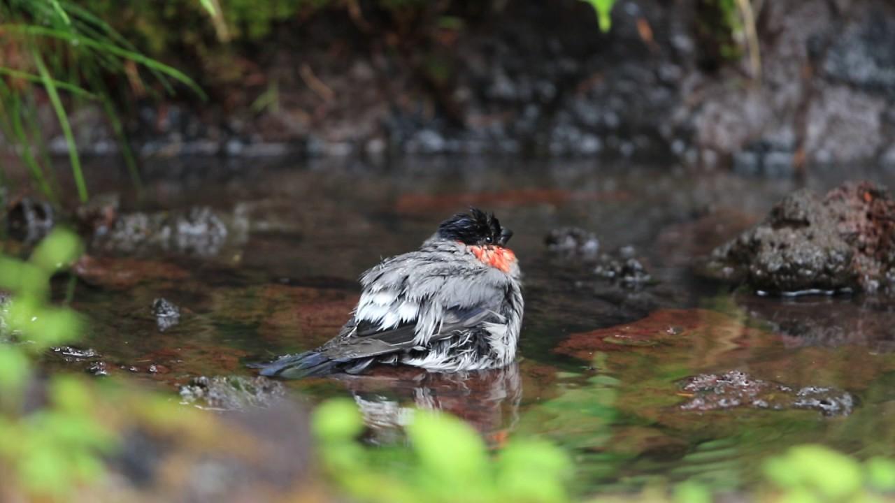 絶好の富士山五合目自然観察ポイント 「奥庭自然公園」|富士Calmトピックス 人材開発センター 富士研修所
