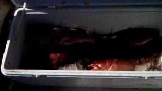 hernando beach florida gulf grouper deep sea fishing with captain rick rodriguez