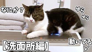 🐈猫のいる暮らし〜洗面所編〜 #shorts