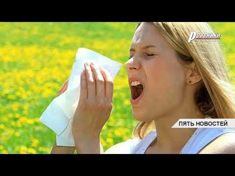 Аллергия на амброзию: что делать?