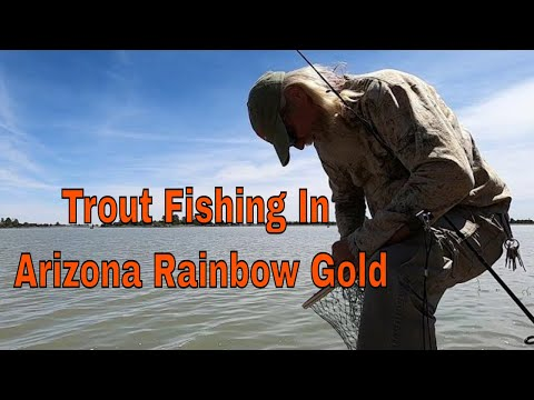 Trout Fishing In The Flagstaff Part 2, Rainbow Gold