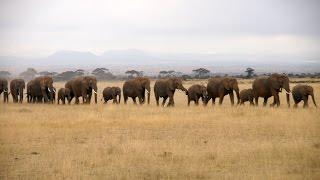 ケニア4 アンボセリ国立公園とキリマンジャロ山