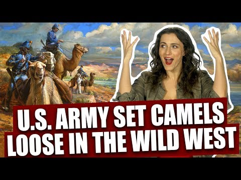 That time the U.S. Army set feral camels loose in the Wild West