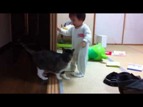 ヨチヨチ歩きの赤ちゃんを尻尾であやす猫 baby sitter cat1 youtube