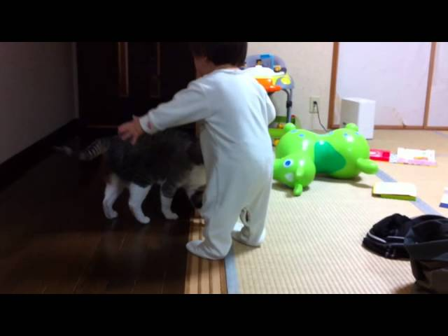 ヨチヨチ歩きの赤ちゃんを尻尾であやす猫 baby sitter cat1