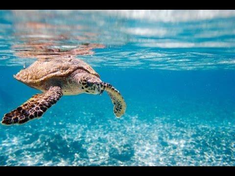 SEYCHELLES ♥ Mahé Island - Praslin Island - La Digue Island