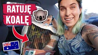Ratuję KOALĘ w Australii!  Jedziemy do szpitala dla zwierząt | Agnieszka Grzelak Vlog