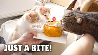 LuLu Stole a Bite of Cake! | Kittisaurus