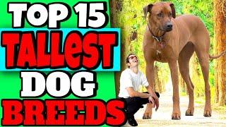 Top 15 Tallest Dog breeds  Worlds Tallest Dogs List
