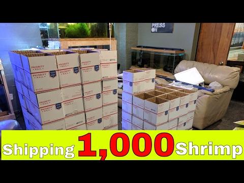 Shipping Madness.. Shipping 1,000 Shrimp