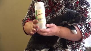 ПРЕПАРАТ ВЕТОМ для ЖИВОТНЫХ || История выздоровления подстрелянного кота Саймона